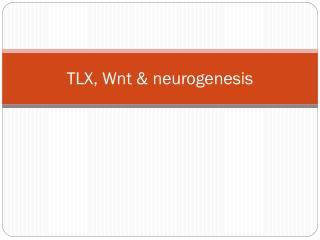 TLX, Wnt & neurogenesis