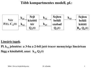 Több kompartmentes modell, pl.:
