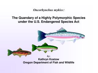 Oncorhynchus mykiss : The Quandary of a Highly Polymorphic Species