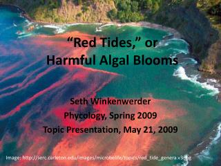 """Red Tides,"" or  Harmful Algal Blooms"