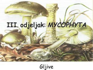 III. odjeljak:  MYCOPHYTA