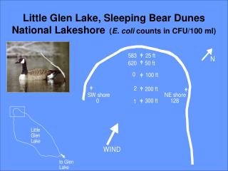 Little Glen Lake, Sleeping Bear Dunes National Lakeshore   ( E. coli  counts in CFU/100 ml)