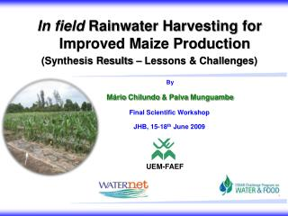 In field  Rainwater Harvesting for Improved Maize Production