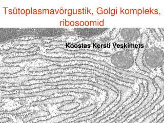 Tsütoplasmavõrgustik, Golgi kompleks, ribosoomid