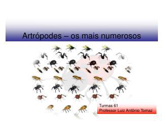 Artrópodes – os mais numerosos