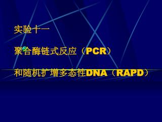 实验十一  聚合酶链式反应( PCR ) 和随机扩增多态性 DNA ( RAPD )