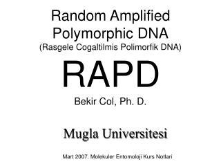Random Amplified Polymorphic DNA (Rasgele Cogaltilmis Polimorfik DNA) RAPD