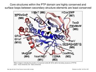 Core structures within the PTP domain are highly conserved and