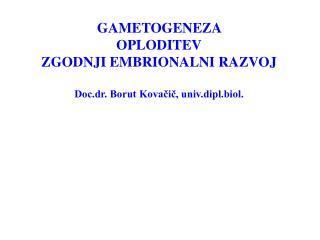 GAMETOGENEZA  OPLODITEV ZGODNJI EMBRIONALNI RAZVOJ Doc.dr. Borut Kovačič, univ.dipl.biol.