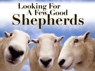 Looking For Shepherds