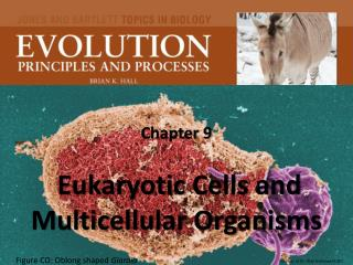 Chapter 9   Eukaryotic Cells and Multicellular Organisms