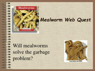 Mealworm Web Quest