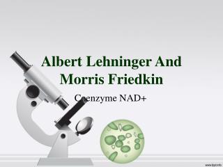 Albert Lehninger And Morris Friedkin