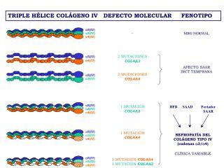 NEFROPAT � A DEL  COL�GENO  TIP O  IV (cadenas  ?3/?4) CL�NICA  VARIABLE