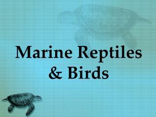 Marine Reptiles  & Birds
