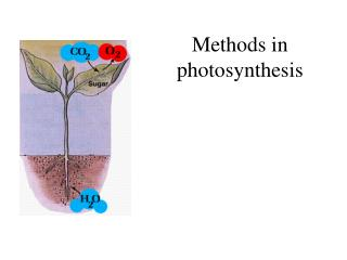 Methods in photosynthesis