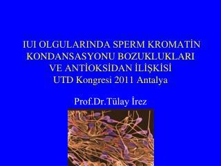 Prof.Dr.Tülay İrez