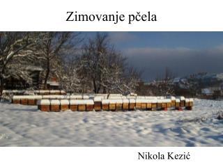 Zimovanje pčela