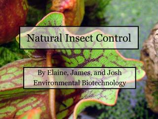 Natural Insect Control