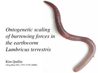 Ontogenetic scaling  of burrowing forces in the earthworm Lumbricus terrestris