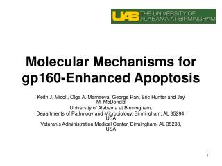 Molecular Mechanisms for gp160-Enhanced Apoptosis