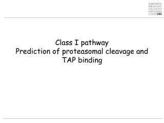 Class I pathway Prediction of proteasomal cleavage and  TAP binding
