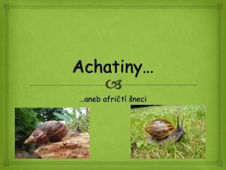Achatiny …