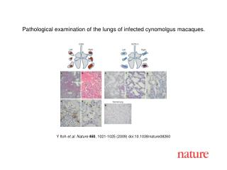 Y Itoh  et al. Nature 460 ,  1021 - 1025  (2009) doi:10.1038/nature08 260