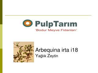 Arbequina  irta i 18 Y ağlık  Z eytin