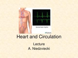 Lecture 3.  Pulmonary Circulation