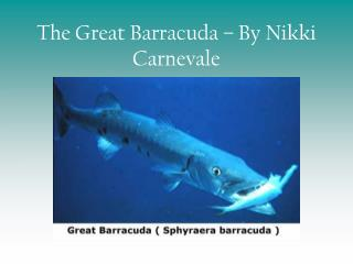 The Great Barracuda   By Nikki Carnevale