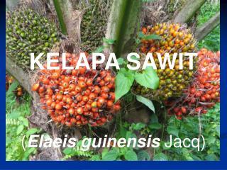 KELAPA SAWIT ( Elaeis guinensis  Jacq)
