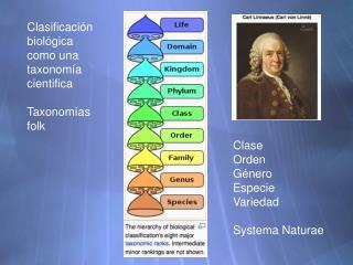 Clasificaci �n biol�gica como una taxonom�a cientifica Taxonom�as folk