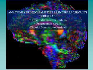 ANATOMIA FUNZONALE DEI PRINCIPALI CIRCUITI CEREBRALI  Circuiti del sistema limbico