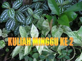 KULIAH MINGGU KE 2