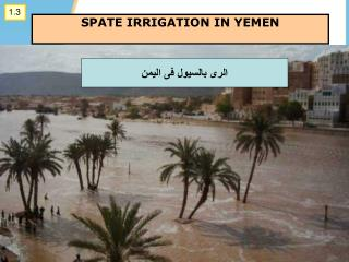 SPATE IRRIGATION IN YEMEN