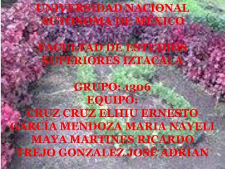 UNIVERSIDAD NACIONAL AUTÓNOMA DE MÉXICO FACULTAD DE ESTUDIOS SUPERIORES IZTACALA GRUPO: 1306