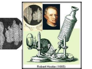 1838   M.J. Schleiden : Los vegetales están formados por células