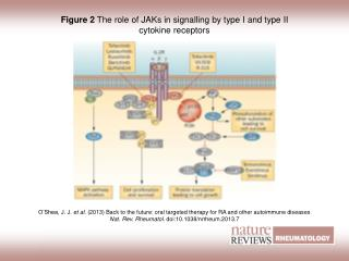 Figure 2 The role of JAKs in signalling by type I and type II cytokine receptors
