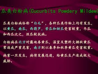 瓜类白粉病 (Cucurbits Powdery Mildew)