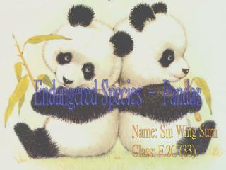 Endangered Species – Pandas