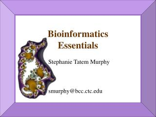 Bioinformatics  Essentials Stephanie Tatem Murphy smurphy@bcc.ctc