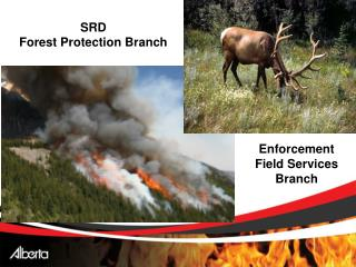 SRD                                Forest Protection Branch