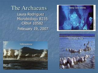 The Archaeans