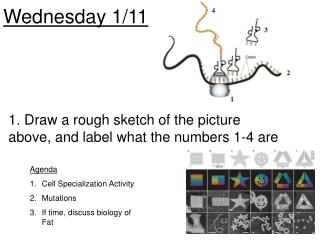 Wednesday 1/11