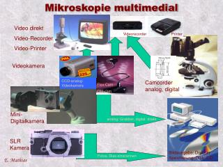 Mikroskopie multimedial