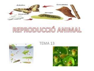 REPRODUCCIÓ ANIMAL