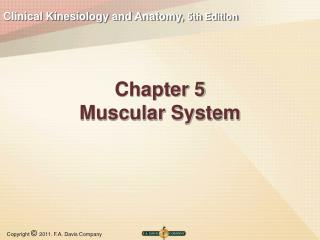 Chapter 5 Muscular System