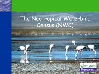 The Neotropical Waterbird Census (NWC)