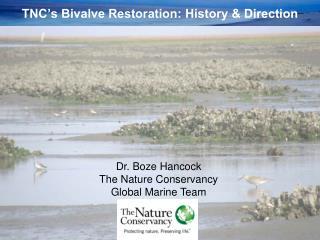 TNC's Bivalve Restoration: History & Direction